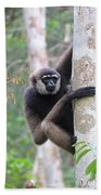 Bornean White-bearded Gibbon Beach Towel