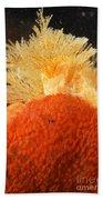 Bowerbanks Halichondria & Spiral-tufted Beach Towel by Ted Kinsman