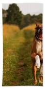 Boxer Dog Running Happily Through Field Beach Towel by Stephanie McDowell