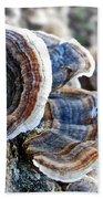 Bracket Fungi - Fungus Beach Towel