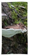Bracket Fungus Beach Towel