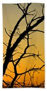 Branches Reaching The Sunset Beach Towel