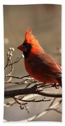 Bright Bold - Cardinal Beach Towel