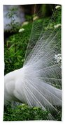 Brilliant Feathers Beach Towel