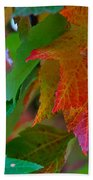 Brilliant Red Maple Leaves Beach Towel