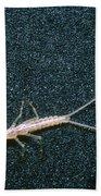 Bristle-tail, A Rare Cave Invertebrate Beach Towel