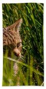 British Wild Cat Beach Towel