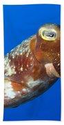 Broadclub Cuttlefish, Papua New Guinea Beach Towel