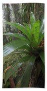 Bromeliad And Tree Ferns Colombia Beach Towel