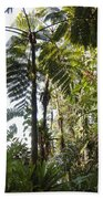 Bromeliad And Tree Ferns  Beach Towel by Cyril Ruoso