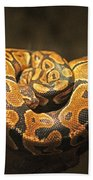 Brown And Black Snake Beach Towel