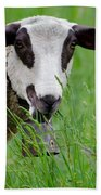 Brown And White Sheep Beach Towel