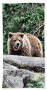 Brown Bear 209 Beach Towel