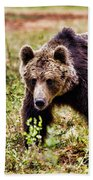 Brown Bear 210 Beach Towel