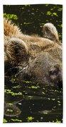 Brown Bear Swimming Beach Towel