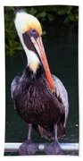 Brown Pelican Islamorada Beach Towel
