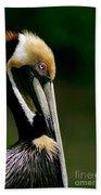 Brown Pelican Profile Beach Towel