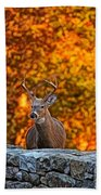 Buck Digital Painting - 01 Beach Towel