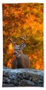 Buck In The Fall 01 Beach Towel