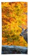Buck In The Fall 06 Beach Towel