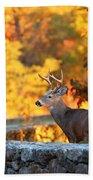 Buck In The Fall 09 Beach Sheet
