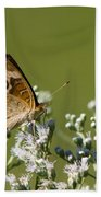 Buckeye Butterfly And Lesser Snakeroot Wildflowers Beach Towel