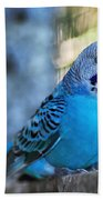 Budgerigar - Parakeet Beach Towel