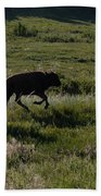 Buffalo Bison Roaming In Custer State Park Sd.-1 Beach Towel