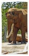 Bull Elephant Beach Towel