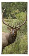 Bull Elk Eyes Beach Towel by James BO  Insogna