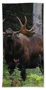Bull Moose Flehmen Beach Towel