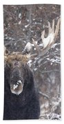 Bull Moose In Winter Beach Towel