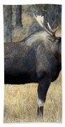 Bull Moose, Peter Lougheed Provincial Beach Towel