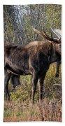 Bull Tolerates Calf Beach Towel