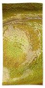 Bullfrog Ear Beach Towel by Ted Kinsman