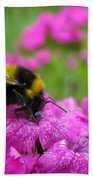 Bumble Bee Searching The Pink Flower Beach Towel