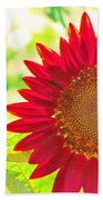 Burgundy Sunflower Beach Towel