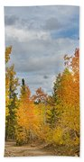 Burning Orange And Gold Autumn Aspens Back Country Colorado Road Beach Towel