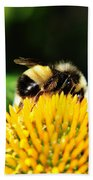 Busy Bee Collecting On Echinacea Pow Wow Beach Towel