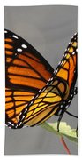 Butterfly - Sitting On The Green Beach Towel
