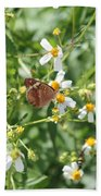 Butterfly 31 Beach Towel
