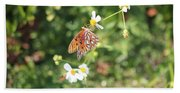 Butterfly 46 Beach Towel