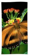 Butterfly Dryadula Heliconius Feeding Beach Towel