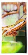 Butterfly Frosted Glass Beach Towel