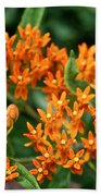 Butterfly Milkweed Beach Towel