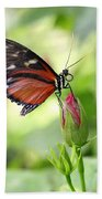 Butterfly Resting Beach Towel