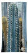 Cactus 14 Beach Towel