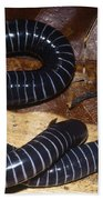 Caecilian Beach Towel