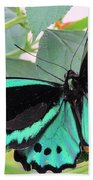 Butterfly Of Many Colors Beach Towel