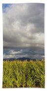 California Cornfield Beach Towel